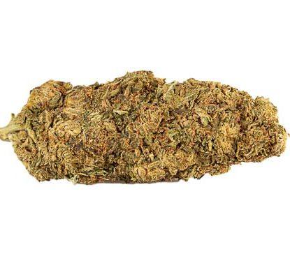 Cogollos de marihuana cbd Mango Haze