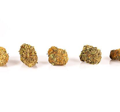 Cogollos-OrangeBud-marihuana-CBD