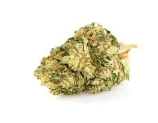 Lemon Cheese Cogollo de Marihuana CBD
