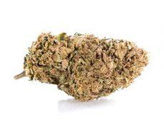 Lemon Cheese Cogollo de Marihuana CBD