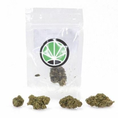 Paquete Cogollos variedad Mango Haze Cannabis CBD