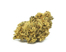 Cogollo de Marihuana CBD White Widow