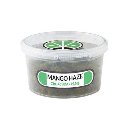 Contenedor de cogollos Mango Haze cannabis legal Cbd Espana