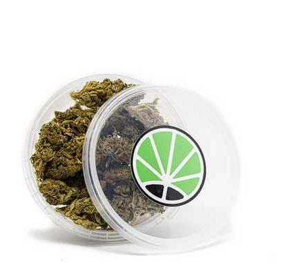 contenedor de white widow marihuana cbd