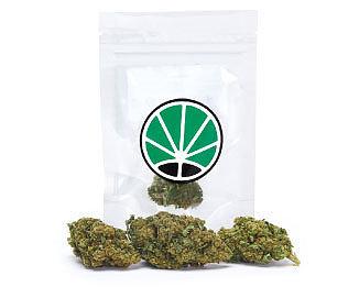 lemon-cheese-marihuana-cbd-thc-cannabis-sativa