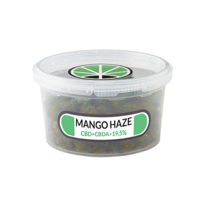 mango-haze-semillas-marihuanas