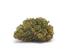orange-bud-marihuana-indica-cbd-thc