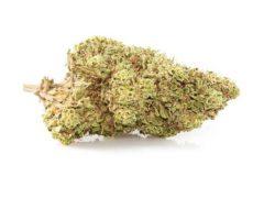 orange skunk marihuana sin thc