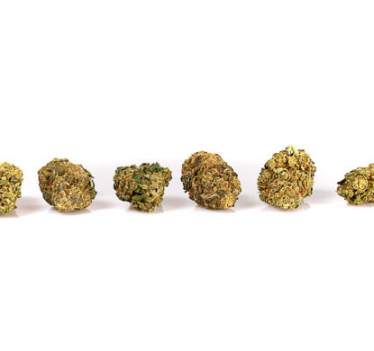 Cogollos de Gorilla Glue marihuana Cannabis