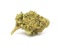 gorilla glue marihuana cannabis