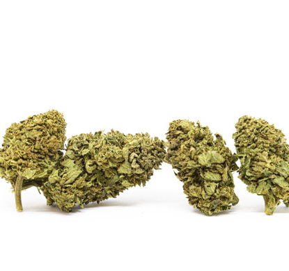 Cogollos de Gorilla Glue marihuana sin thc