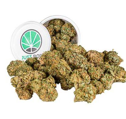 Contenedor de Flores variedad Bubblegum Marihuana cbd legal