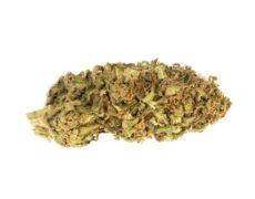 Cogollos Bubblegum marihuana CBD on line
