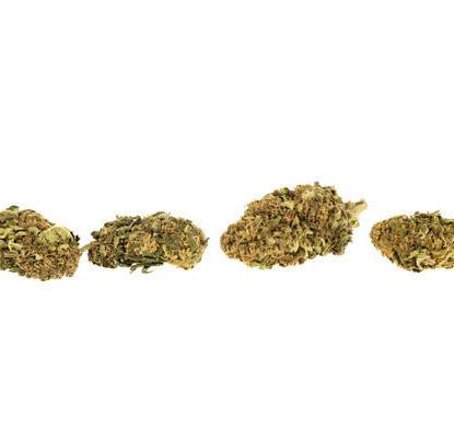 Flores de Bubblegum para comprar Marihuana cbd online