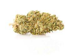 Master Kush CBD Online Marihuana