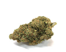 bubblegum-marihuana