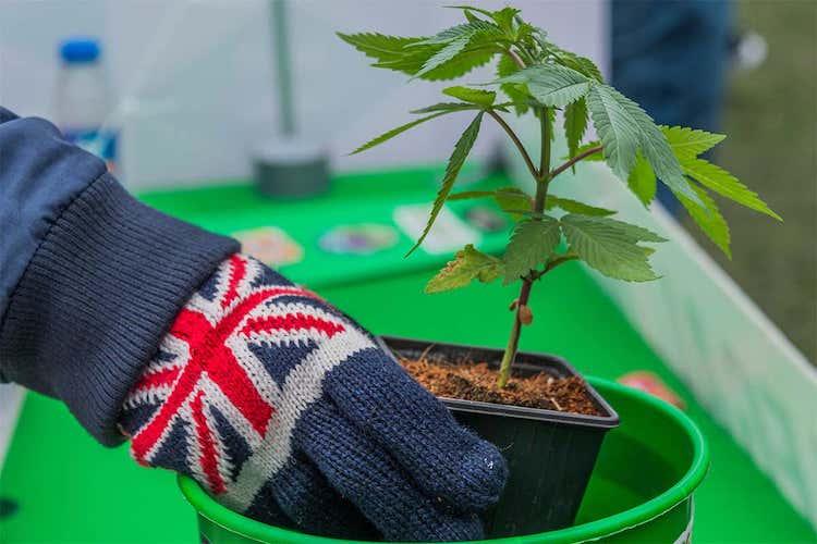 Comprar y enviar a domicilio el cannabis en el Reino Unido