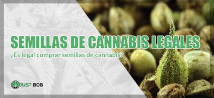 Semillas de cannabis legales