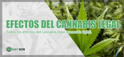 efectos del cannabis legal