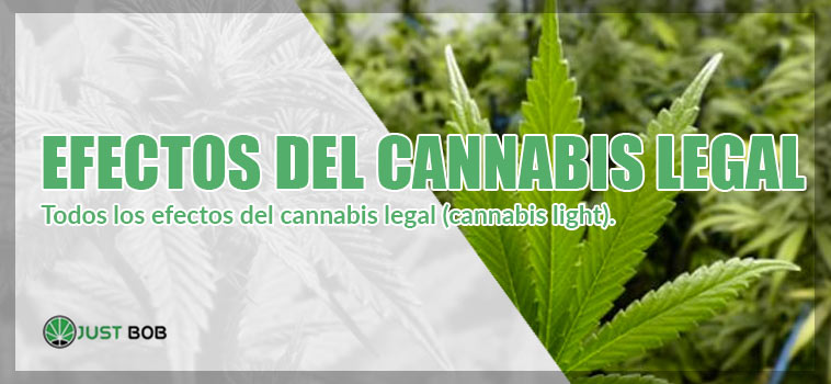 efectos del cannabis legal