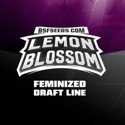 Lemon-Blossom-semillas-de-canamo-feminizadas
