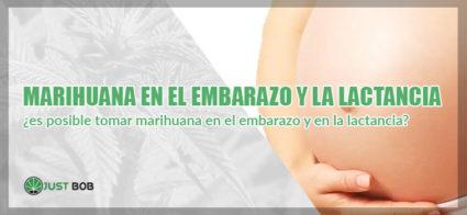 marihuana en el embarazo y en la lactancia