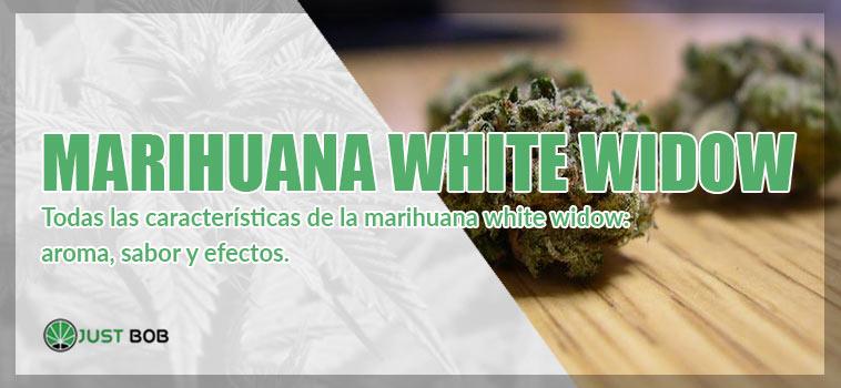 características de la marihuana white widow