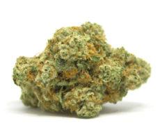 gorilla-glue-canamo-cbd-cannabis
