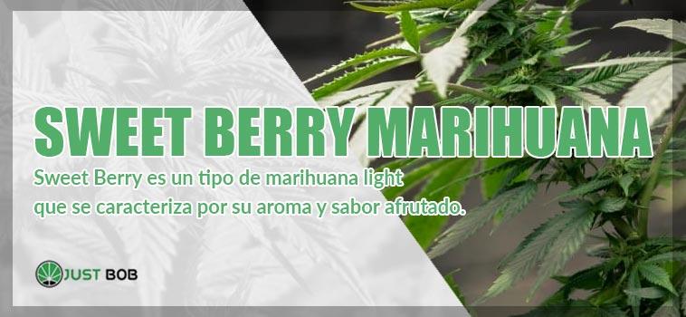 sweet berry marihuana justbob