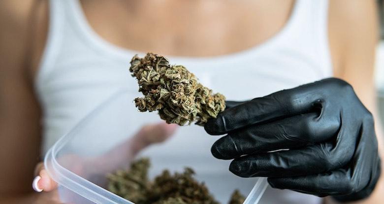 mejores variedades de cannabis legal