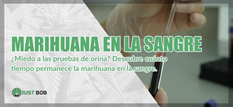 Marihuana en la sangre cbd