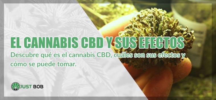 el cannabis CBD y sus efectos