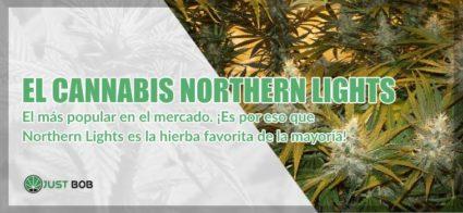 el cannabis Northern Lights marihuana cbd