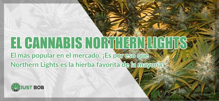el cannabis Northern Lights marihuana cbd