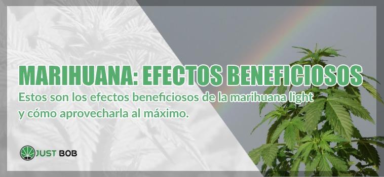 marihuana light efectos beneficiosos y terapeuticos cbd