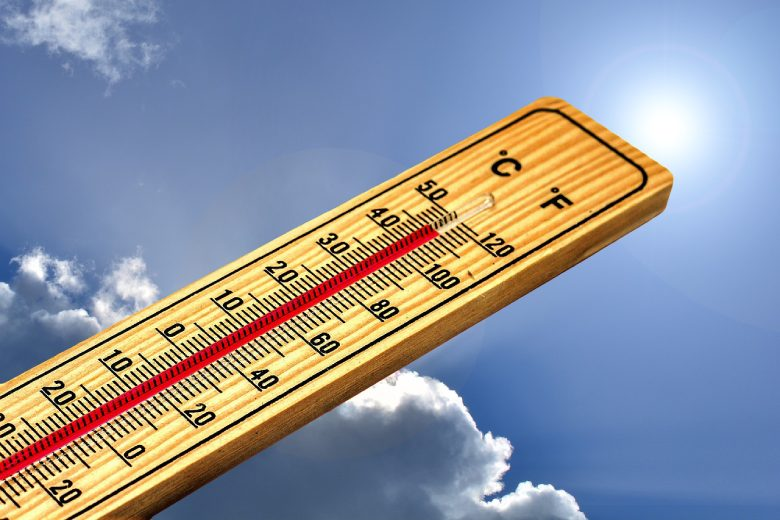 el cambio de temperatura del día a la noche hace toda la diferencia para las plantas de cannabis ligero
