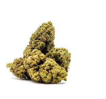 master kush marihuana canamo cbd