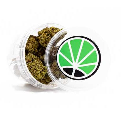 master-kush-seeds-thc-marihuana