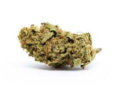 Flor de Marihuana CBD Melon Kush