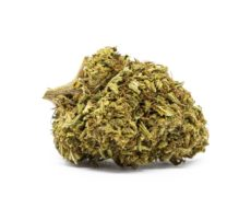 Flor de Marihuana CBD Orange Bud