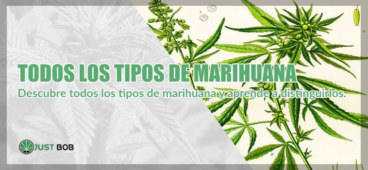 tipos de marihuana legal
