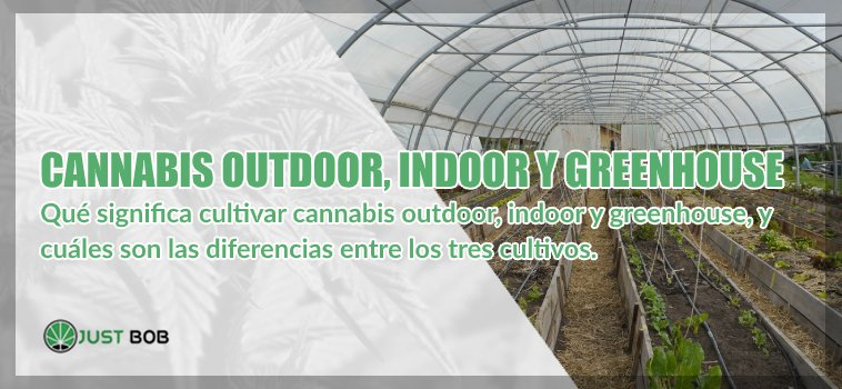 Cannabis legal outdoor y indoor