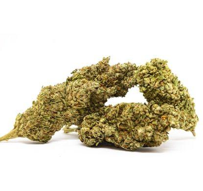 bubblegum cannabis indica espana