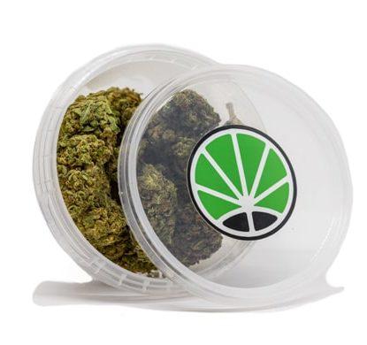 Cogollos de Bubblegum marihuana sin thc