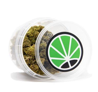 cannabis thc bubblegum