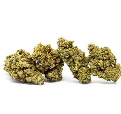 do si dos semillas marihuana