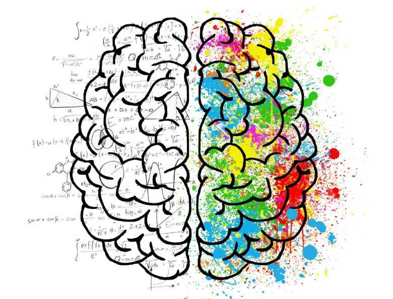 efectos cerebrales del canamo legal