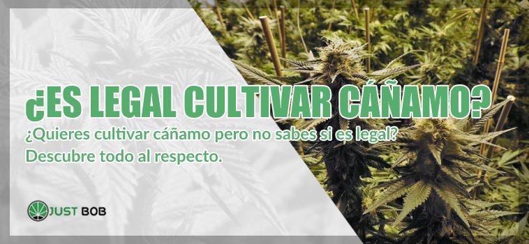 es legal cultivar canamo