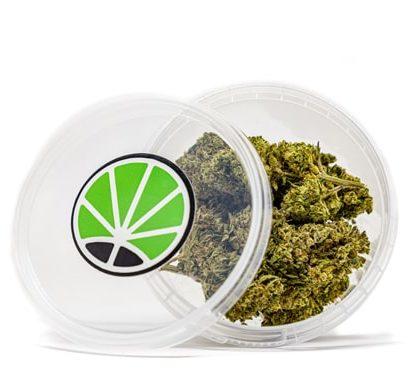 gorilla glue cogollos de marihuana