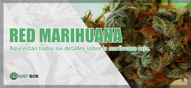 marihuana roja y cannabis legal